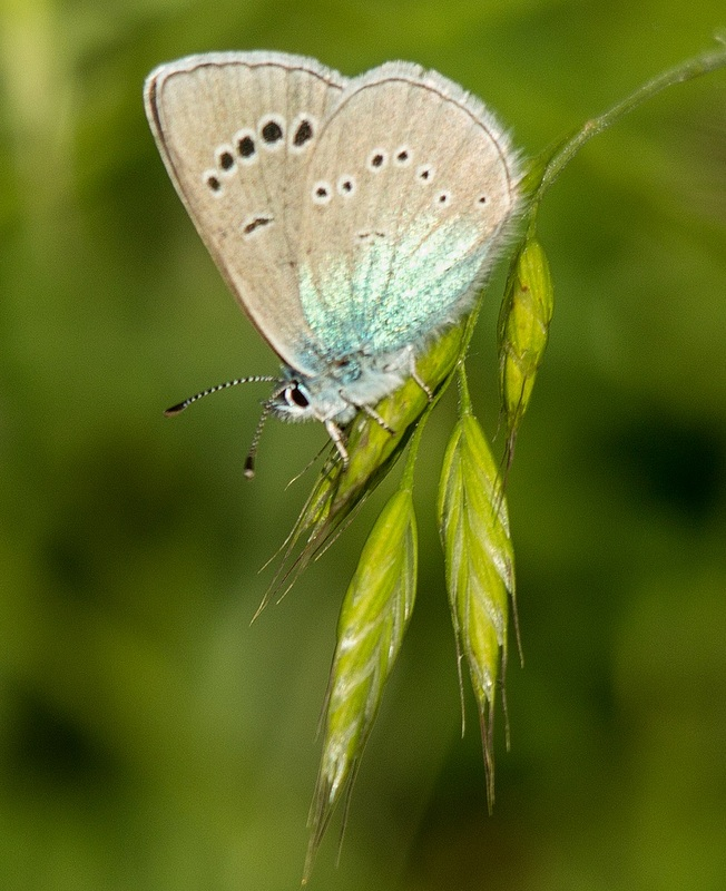 Image of Tuscany butterfly